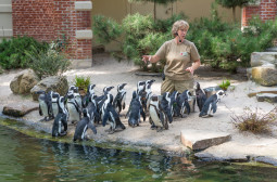 How to Become a Zoologist or Wildlife Biologist